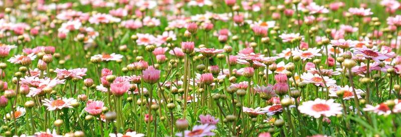 bloemenhoroscoop