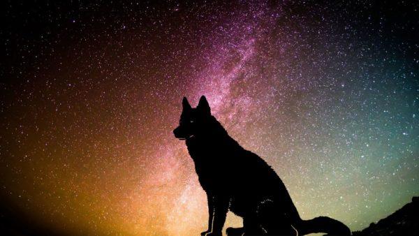 Huisdieren horoscoop